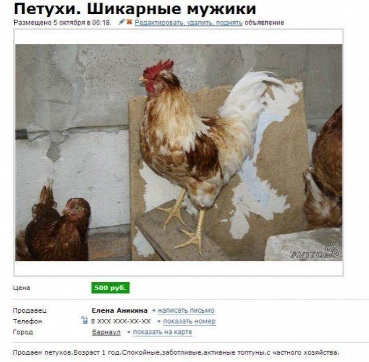 Попугай с характером, усатое чудовище и прочие объявления на Авито)))