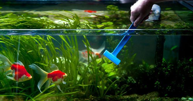 Уход за аквариумом – как часто нужно мыть емкость, уход за обителями, правила содержания