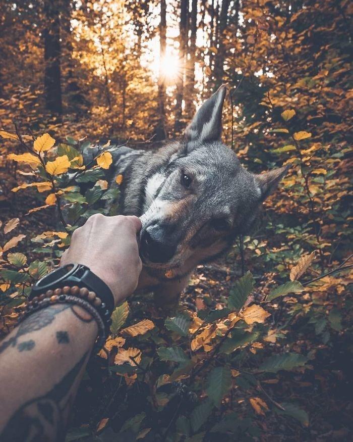 18. follow me, инстаграмм, собака, собака - друг человека, флешмоб, флешмобы. instagram, фото природы, фотограф