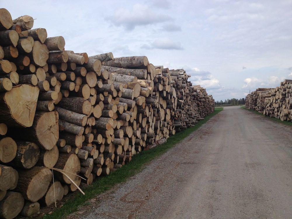 Украина признана лидером по контрабанде древесины в Евросоюз