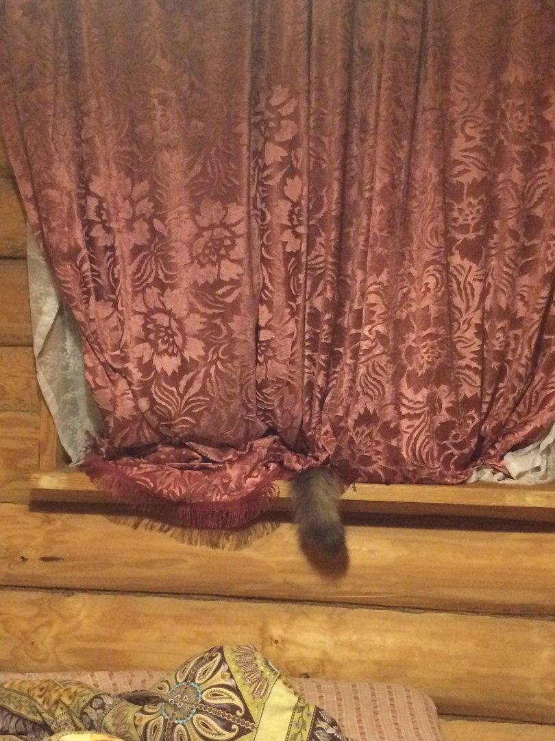 Найди кота!