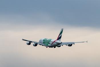 Собака открыла багажный отсек самолета во время полета и выжила