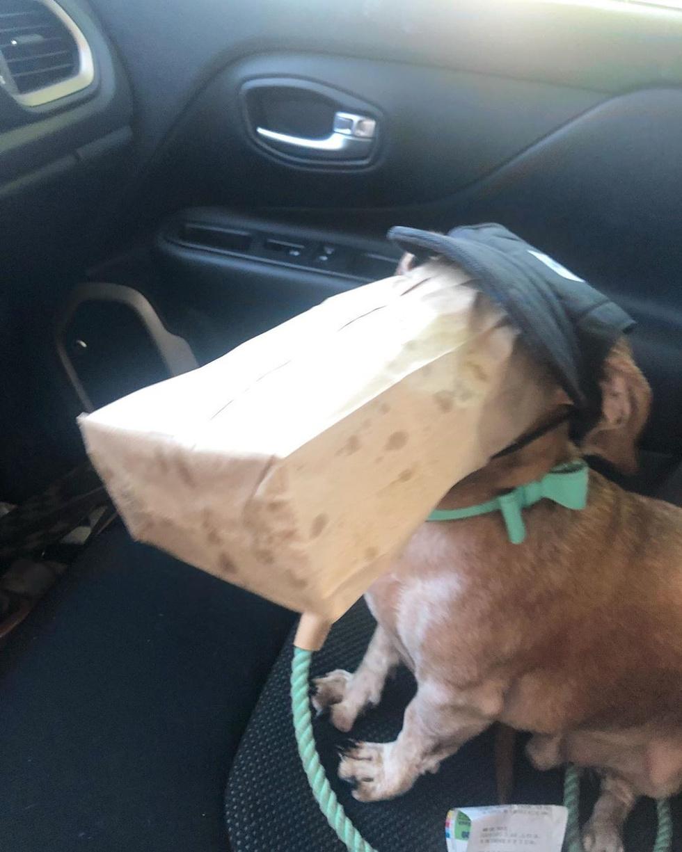 От этих фото невозможно не засмеяться: 10 собак, начихавших на все законы логики