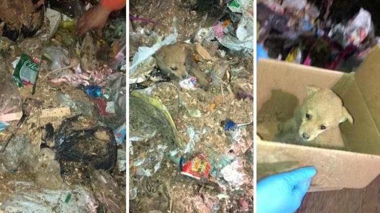 В контейнере с мусором рабочие нашли маленького щенка!