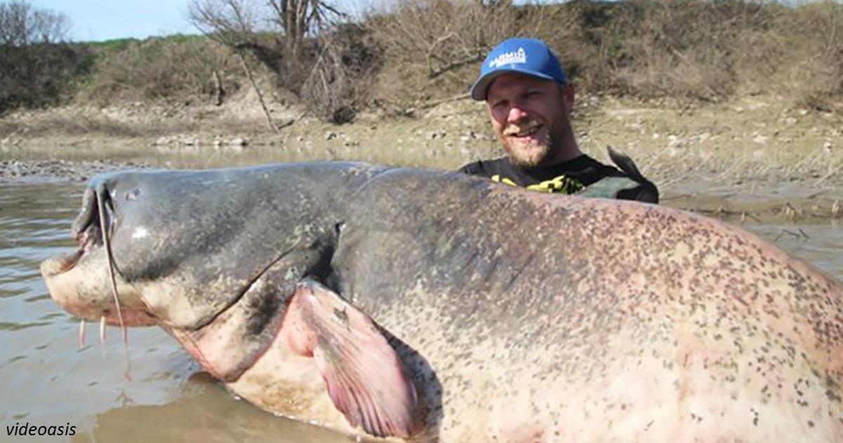 Рыбак поймал сома, который даже не помещается на фото