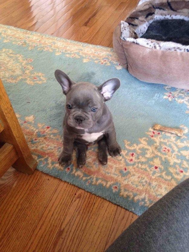 самые милые щеночки в мире (23)