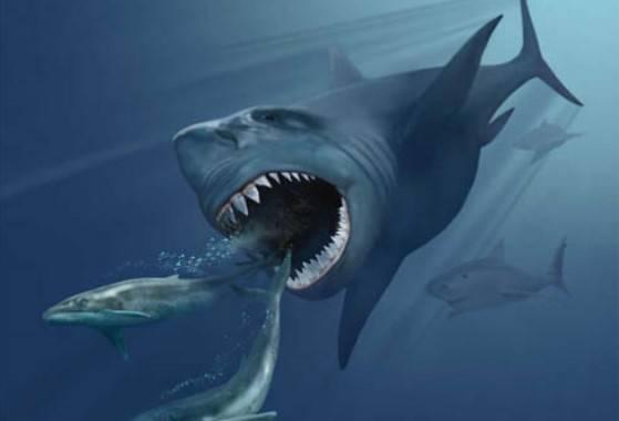 Гигантская акула мегалодон с…