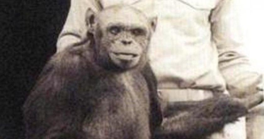 По утверждению известного учёного, сто лет назад родился ребёнок от человека и обезьяны