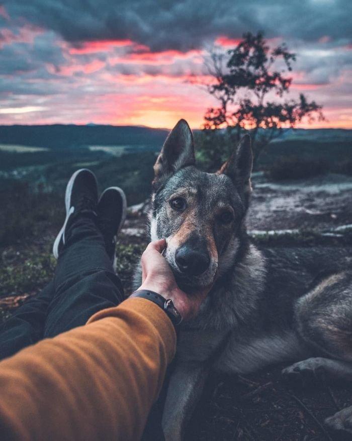 6. follow me, инстаграмм, собака, собака - друг человека, флешмоб, флешмобы. instagram, фото природы, фотограф