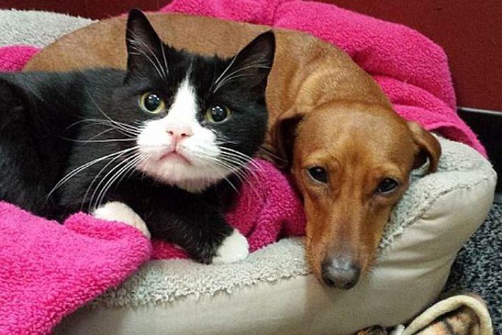 Кот помогает собаке справиться с нахлынувшими эмоциями.