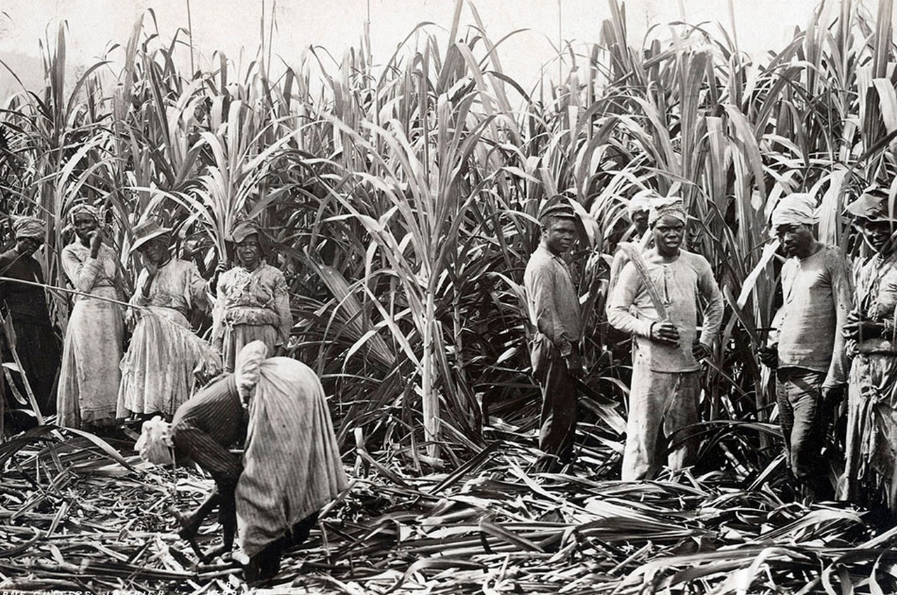 plantation crops and the slavery system The colonial plantation system  slavery existed  the decline in the value of tobacco compelled many planters to turn to the raising of other crops in which.