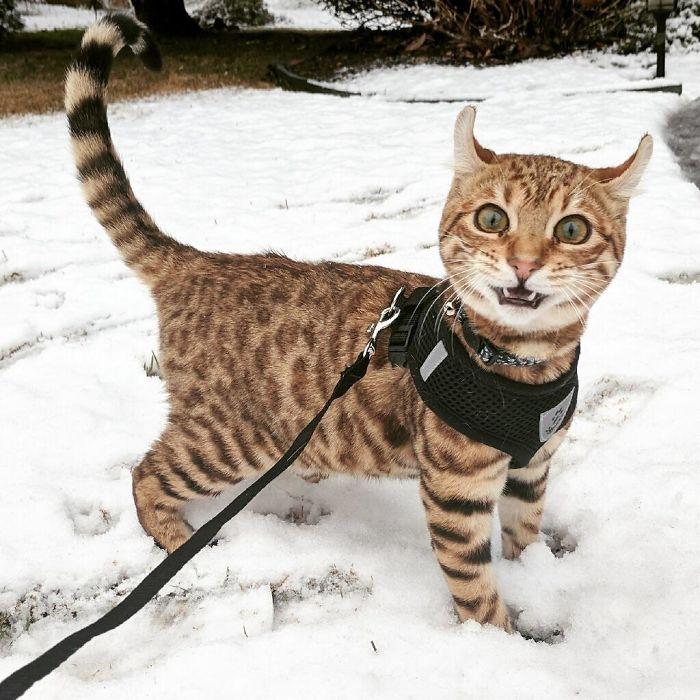 Домашние животные впервые увидели снег