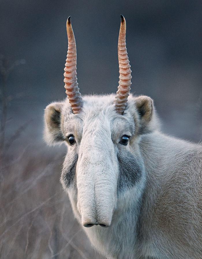 Фотограф 2 года снимал животных, которые на грани вымирания
