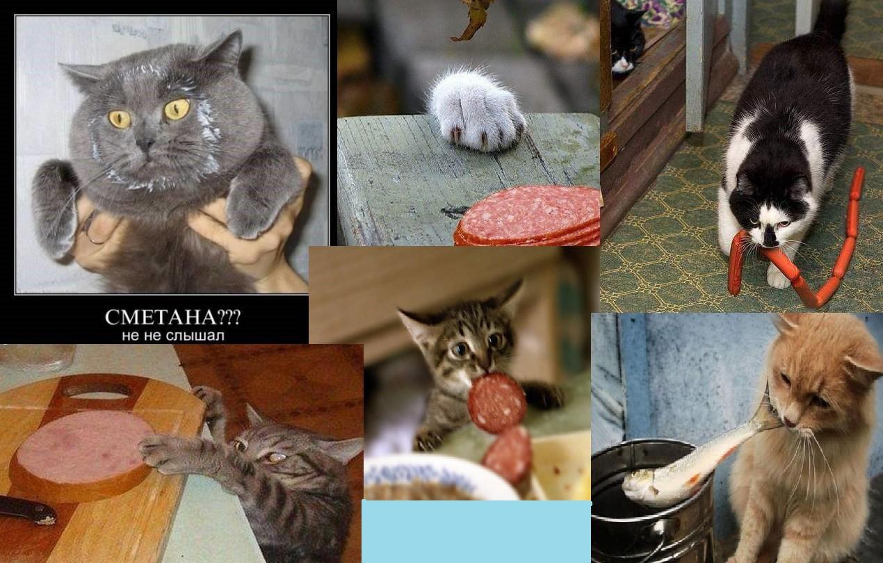 Коты Воришки)))