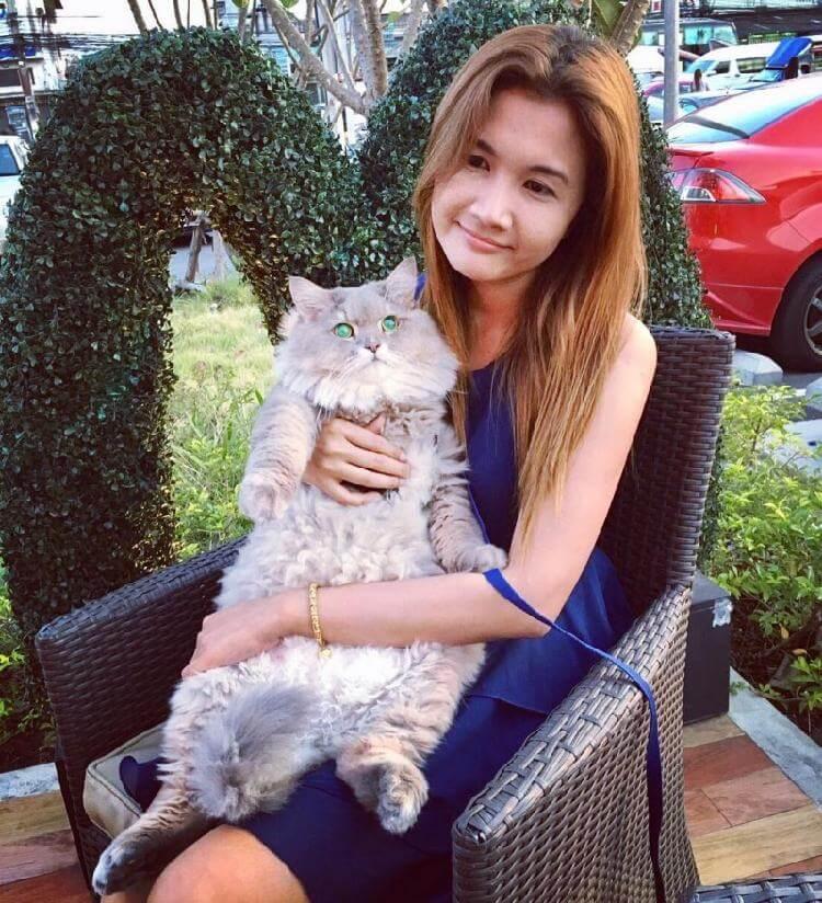 Этот милый огромный котик стал самым популярным питомцев в своей стране