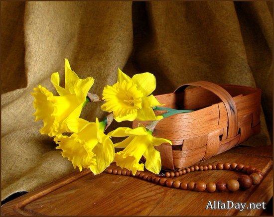Нарцисс, символика и значение
