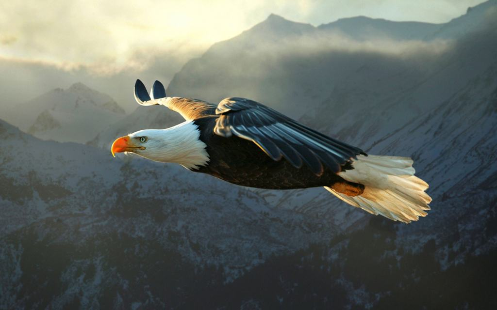 Парящий Орел — царь птиц.Символ 2019 года по Славянскому календарю
