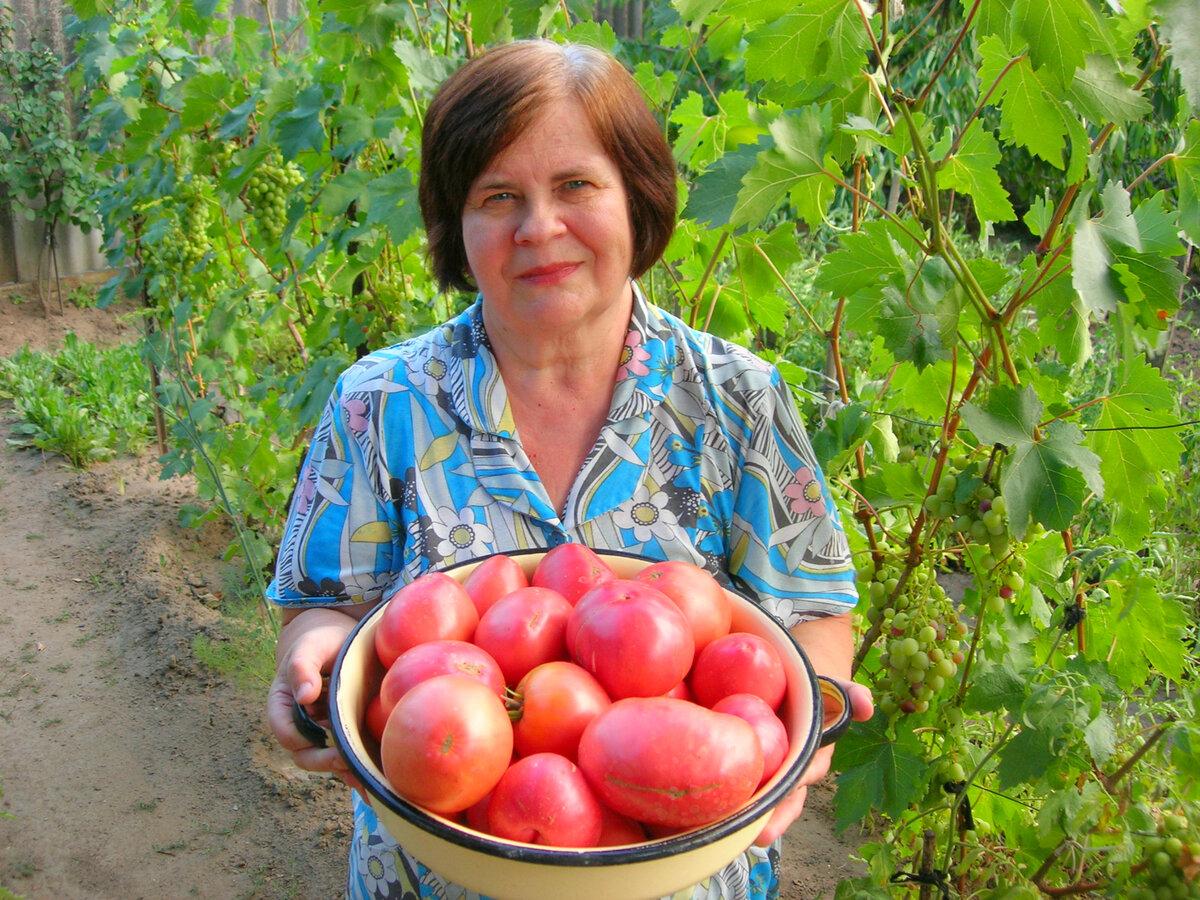 Розовые помидоры. Какие сорта сажаю каждый год. Рекомендации, посадка и уход!