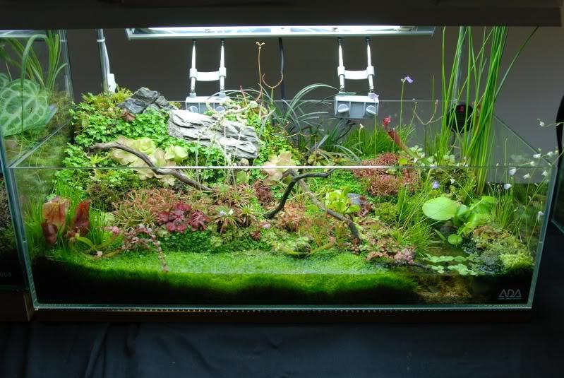 Растения для палюдариума: ви…