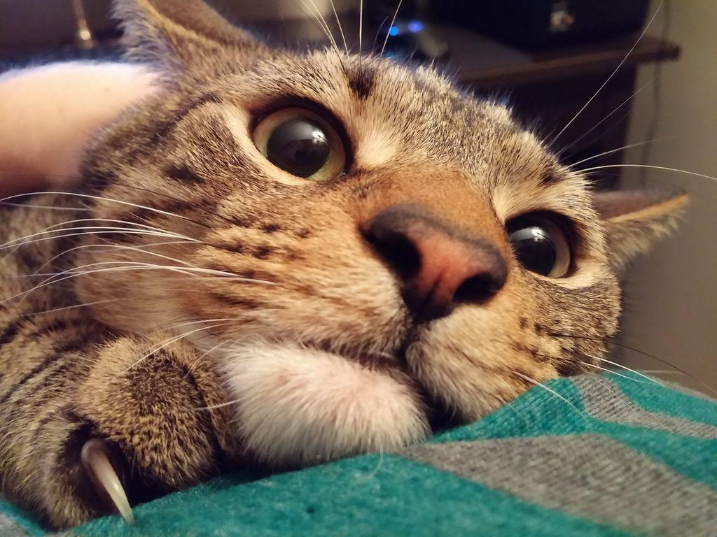 Картинки кошек смешно, картинки