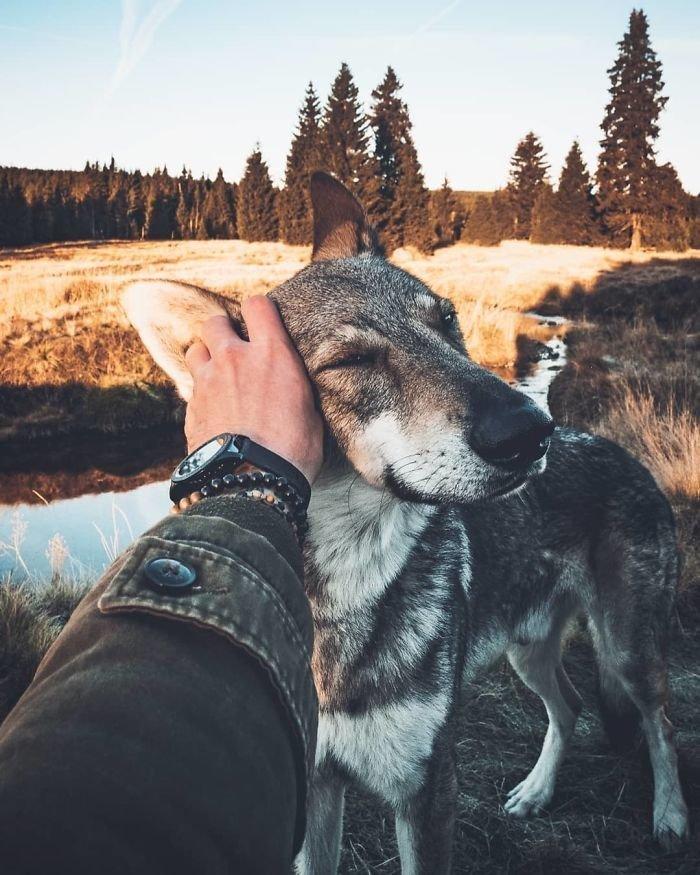 10. follow me, инстаграмм, собака, собака - друг человека, флешмоб, флешмобы. instagram, фото природы, фотограф