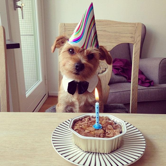 смешные фото с днем рождения меня сожалению
