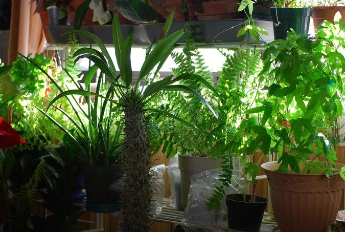 Первая гостиница для комнатных растений появилась в Томске