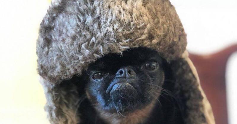 Вечно хмурый пес Чико стал звездой интернета