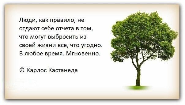 Цитаты Кастанеды.
