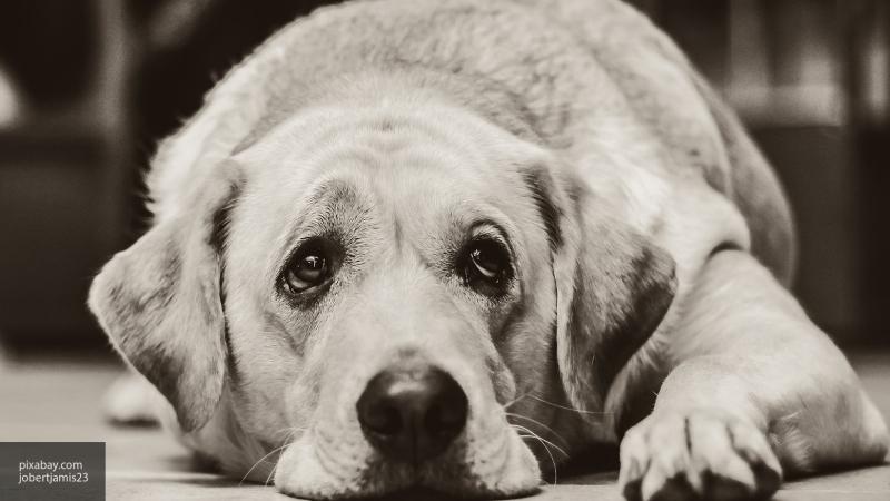 В Сеть выложили видео, где неравнодушные пермяки спасают застрявшую собаку