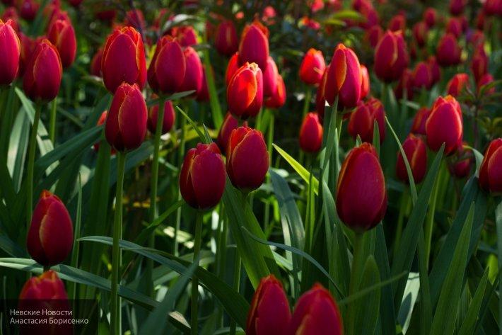 Польская компания вырастит цветы в Смоленской области