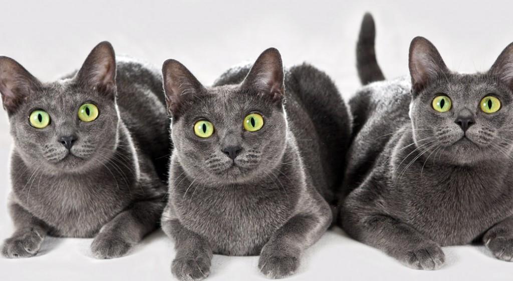 20 самых необычных и дорогих кошек в мире