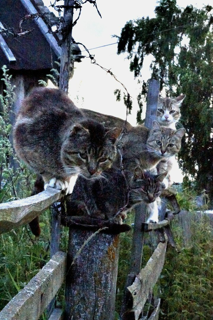 Был бы забор, а кот найдётся!