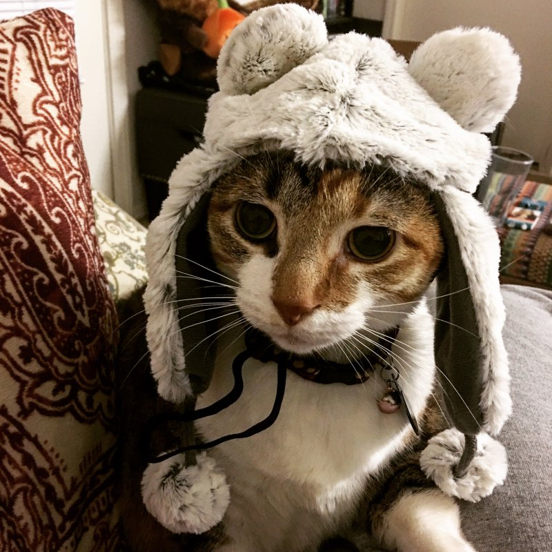 шапки с кошками картинки нас
