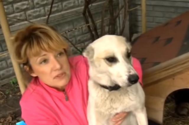 Страшная история бедной собаки
