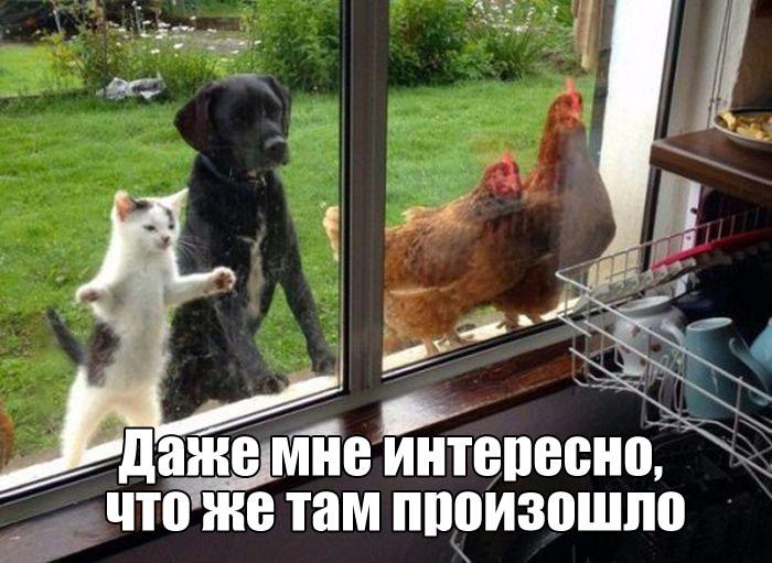 Смешные картинки к 1 сентября с животными до слез, картинки