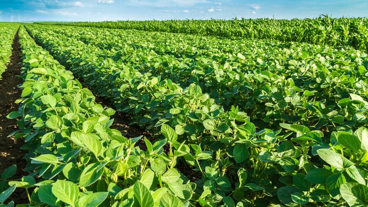 Доказано: Украина - крупнейший в Европе источник нелегальных ГМО