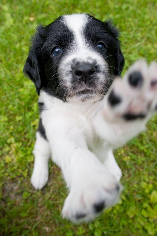 самые милые щеночки в мире (22)