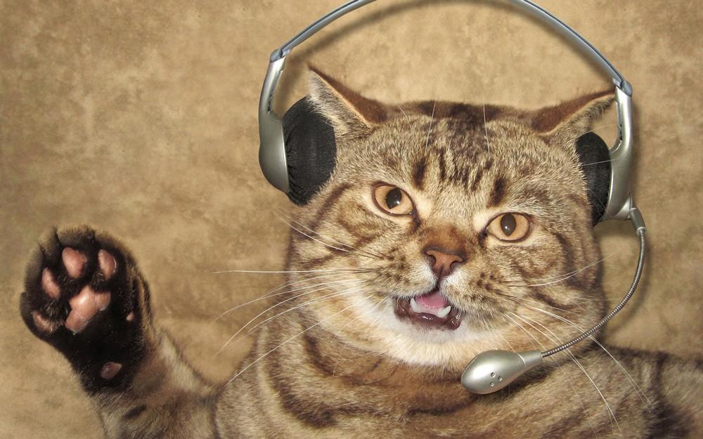Прикольные картинки на аву с котом, подвижными