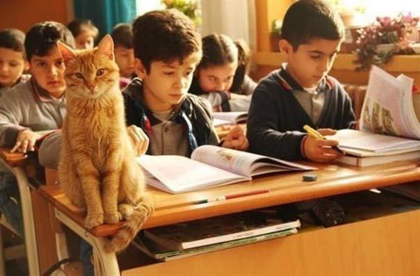 Как рыжий кот официально устроился на работу в школу животные, коты, школа