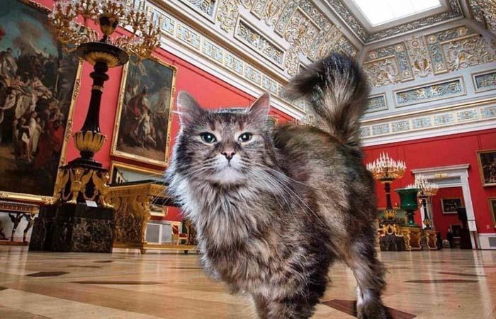 В каких музеях можно увидеть сотрудников-котов, и что они там делают