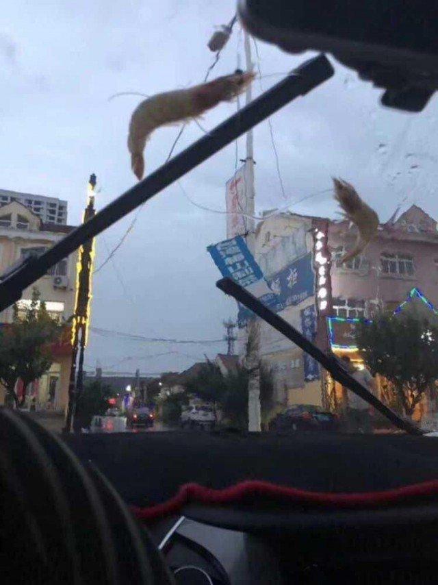 В Китае из-за тайфуна пошел дождь из осьминогов и других морских существ ynews, инцидент, китай, новости, погода, тайфун, фото, шторм