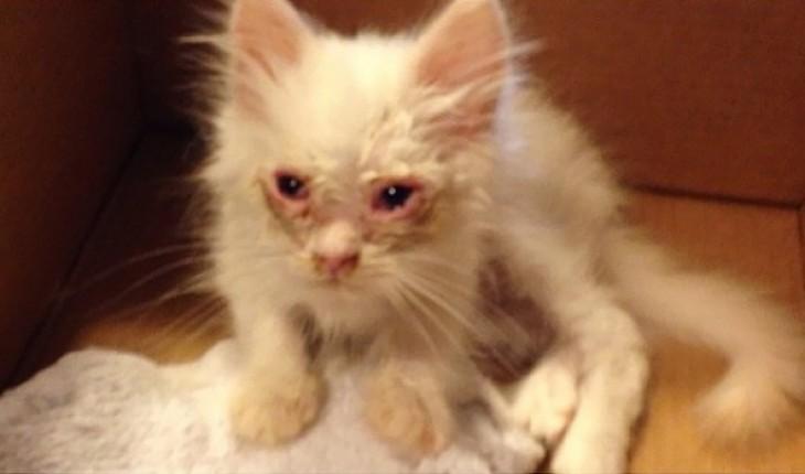 Они подобрали бродячую кошку. Никто и думал, кем она станет через несколько недель (ФОТО)