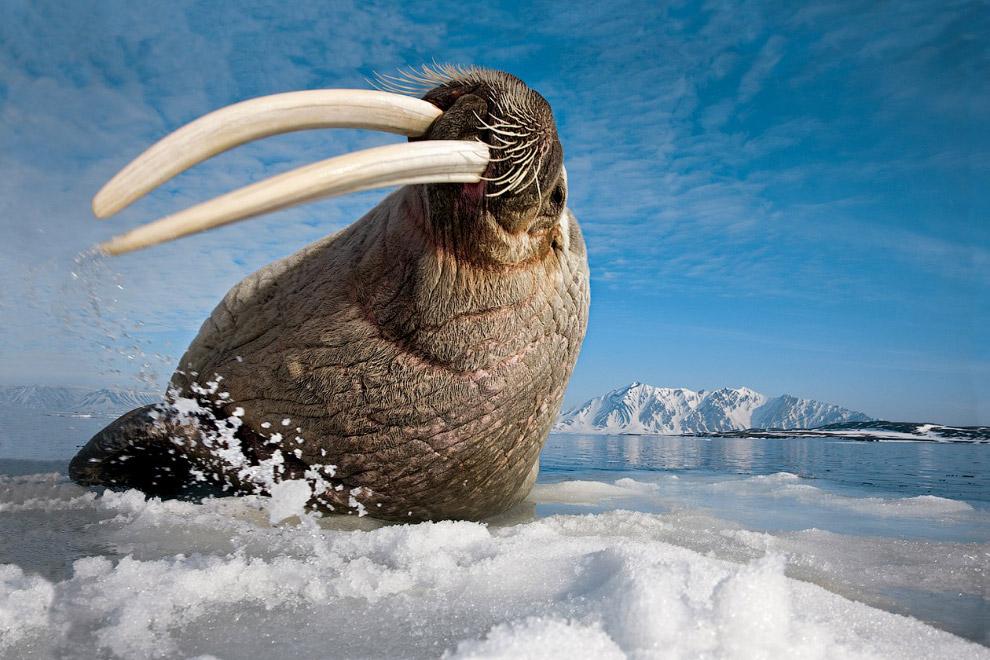 Картинки животных которые обитают в антарктиде