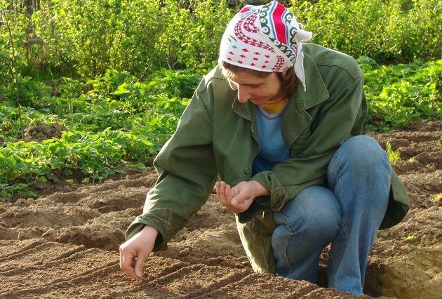 Посев и посадка: три ошибки новичка огород