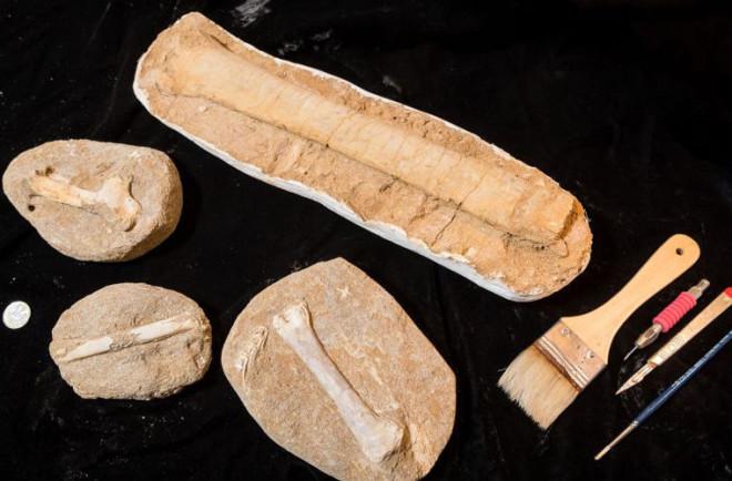 Ученые выяснили кто был главным на планете 200 млн лет назад