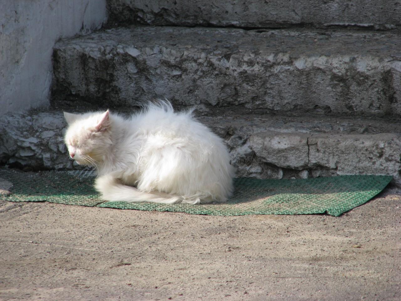 Братья наши меньшие: жила была одна кошка?