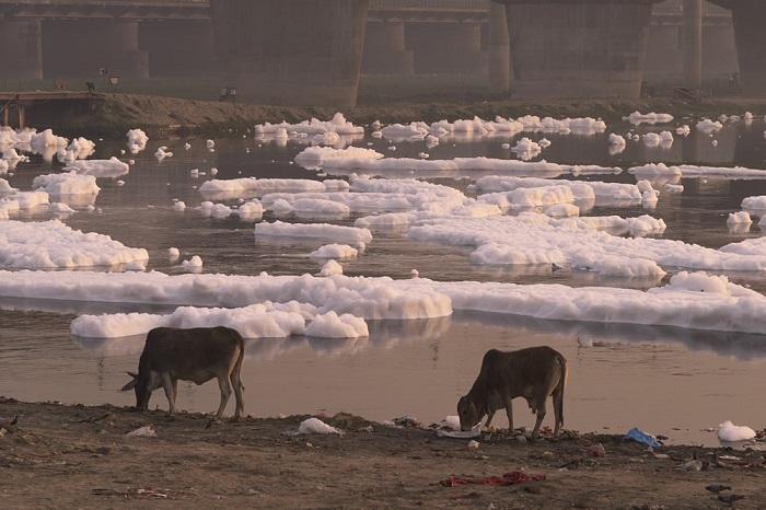 Из-за медленного течения и 5 дамб речная вода часто застаивается и практически не обновляется.