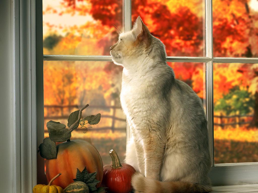 Саша или осенняя история одной кошки