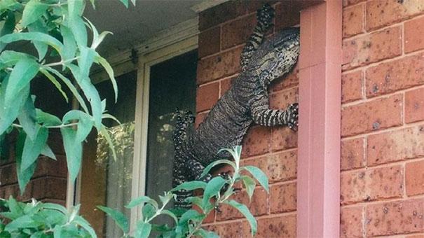8 жутковатых фото, которые доказывают, что жить в Австралии стремно Австралия,животные,интересное